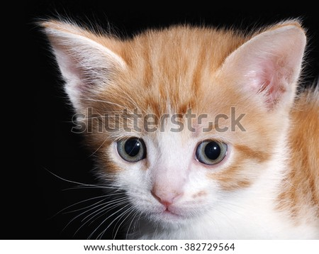 Portrait of little kitten with big eyes. Muzzle cat close portrait. Black background, isolated