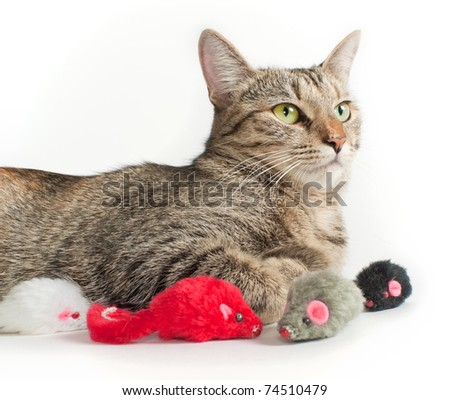 portrait of lying grey cat with toy mice around it - stock photo
