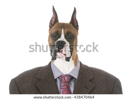 portrait of male boxer wearing a suit jacket isolated on white background