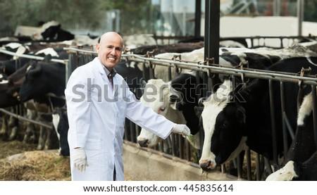 Portrait of male technician caring cows in farm - stock photo