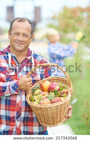 Portrait of mature farmer with basket of apples - stock photo