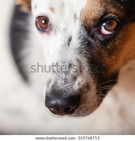 Portrait of mixed breed dog close-up
