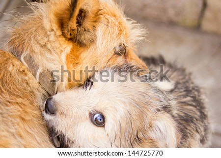 portrait of mongrel dogs - stock photo
