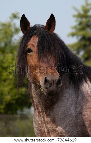 Portrait of nice big horse
