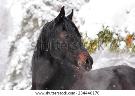 Portrait of nice horse  - stock photo