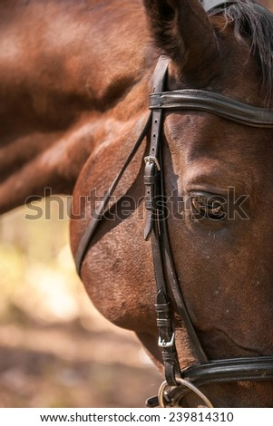 Portrait of nice  horse