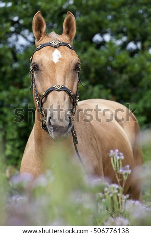 Portrait of nice horse posing on violet flowers