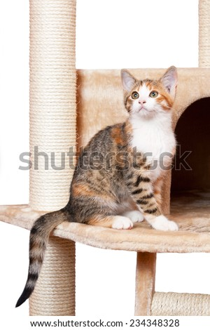 Portrait of nice kitten on isolated background - stock photo