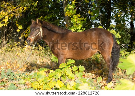 Portrait of nice pony in the autumn background