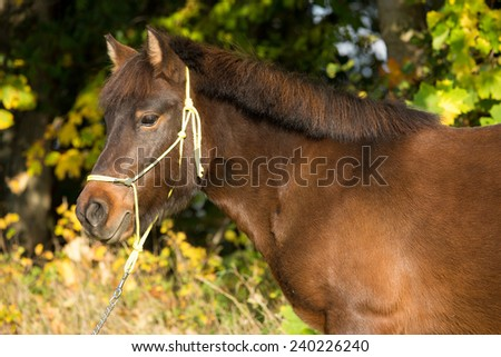 Portrait of nice pony in the autumn background  - stock photo