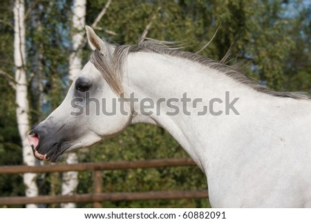 Portrait of nice running horse - stock photo