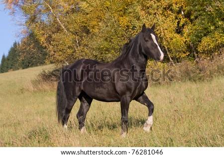 Portrait of nice welsh pony - stock photo