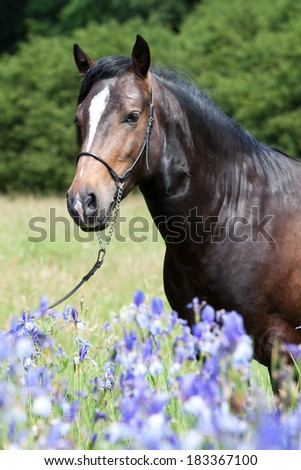 Portrait of nice welsh pony in blooming irises