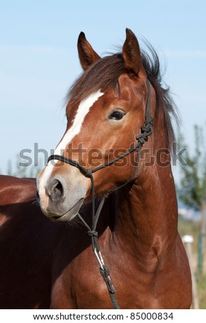 Portrait of nice young horse