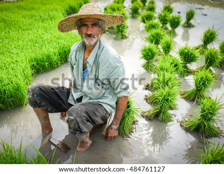 Portrait of old farmer working on rice plantation