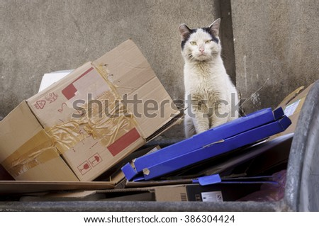 Portrait of old homeless, shabby, dirty,  stray cat, sitting on thrown cardboard boxes  in the filthy garbage container  looking at the camera- photographed in a small downtown street - stock photo