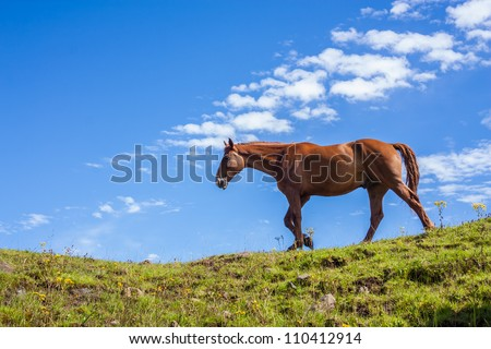 Portrait of one horse walking on a green hill against a blue sky - stock photo