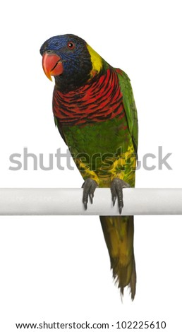 Portrait of Ornate Lorikeet, Trichoglossus ornatus, a parrot, perching in front of white background - stock photo