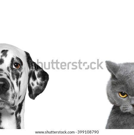 portrait of parts cat and dog isolated on white background - stock photo