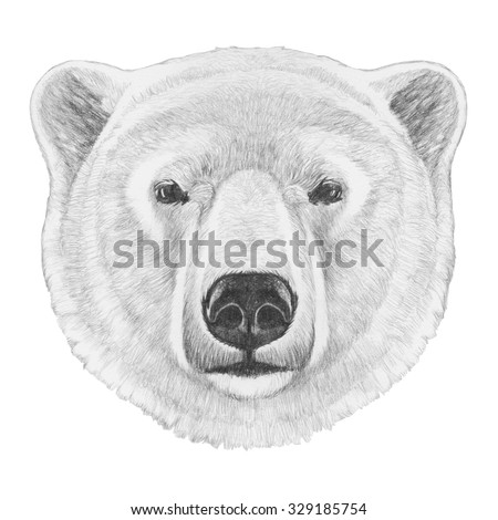 Polar Bear Head Drawing | www.pixshark.com - Images ...