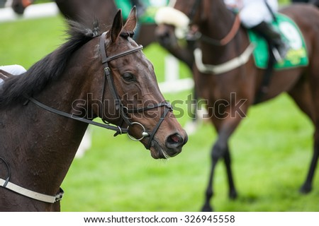 portrait of race horse on the race track - stock photo