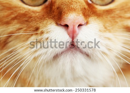 Portrait of red cat, closeup - stock photo