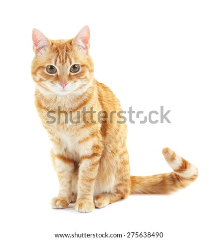 Portrait of red cat isolated on white - stock photo