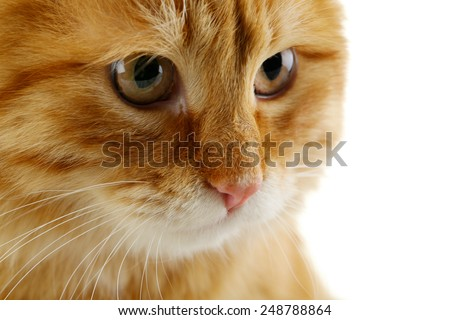 Portrait of red cat on white background - stock photo