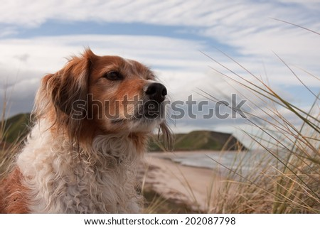 portrait of red dog with interesting cloud formations  - stock photo