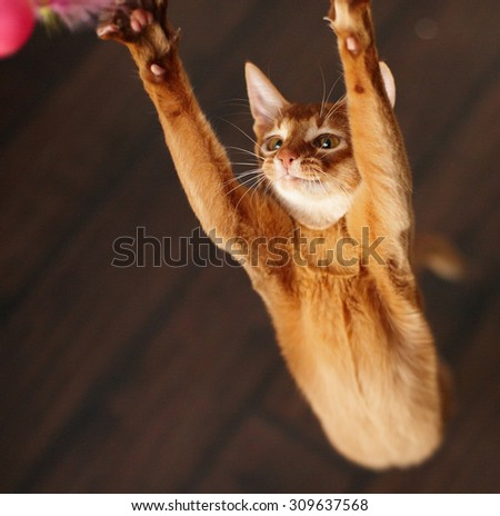 Portrait of red playing cat. - stock photo