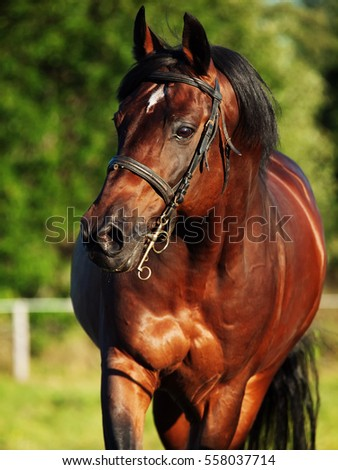 portrait of running bay horse