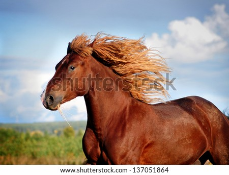 Portrait of running big beautiful horse - stock photo