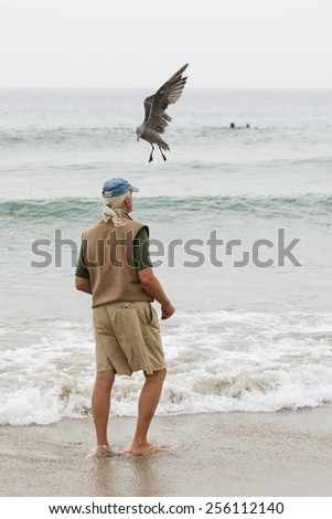 portrait of seagull on sandy beach - stock photo