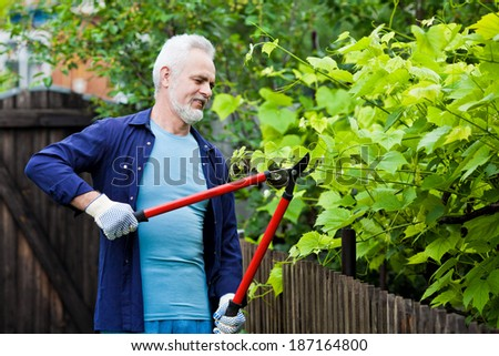 Portrait of senior man gardener pruning an hedge