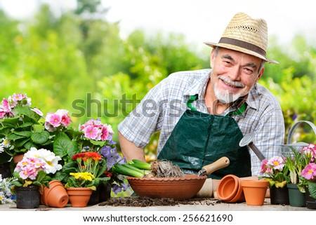 Portrait of senior man in the flower garden - stock photo