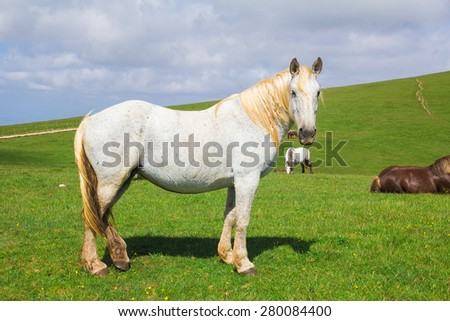 Portrait of silver horse on the Subasio mountain in Umbria, Italy. - stock photo