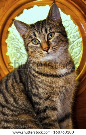 portrait of sitting cat before decoration glass - stock photo