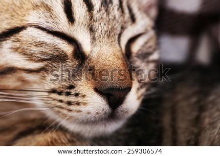 Portrait of sleeping cat, closeup - stock photo