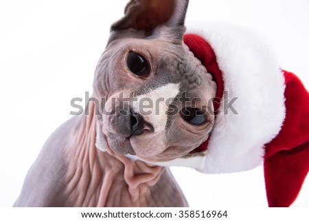 Portrait of Sphynx Cat in Christmas hat - stock photo