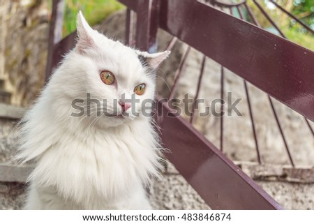 Portrait of spotted cat on stairs.