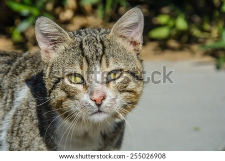 Portrait of Stray cat, looking at the camera - stock photo