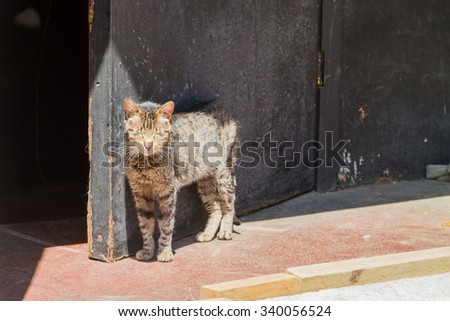 Portrait of street cat in a district of the protected UNESCO World Heritage Site of Valparaiso, Chile - stock photo