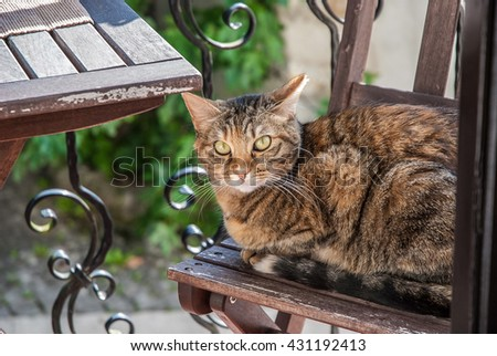 Portrait of tabby cat sitting on balcony chair, horizontal image