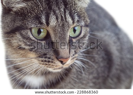 Portrait of tabby green-eyed cat - stock photo