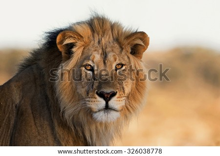 Portrait of the African King - stock photo