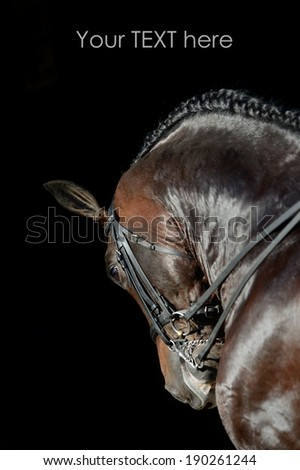 Portrait of the bay sport horse - stock photo