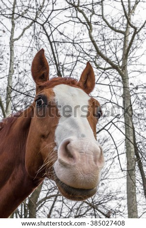 Portrait of the beautiful brown horse from profile - stock photo