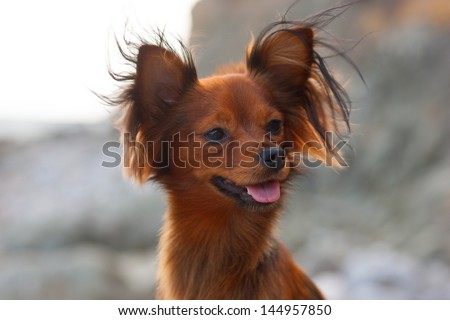 Portrait of the beautiful dog - stock photo