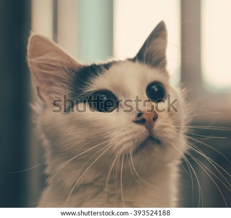 Portrait of the cat on the home window - stock photo