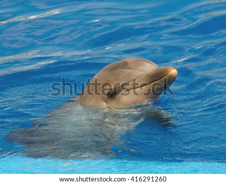 Portrait of the dolphin close up - stock photo